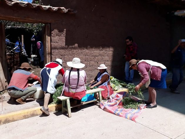 Quechua indigenous farmers from the town of Huasao, in the Andes highlands of Peru, cut insect repellent plants in front of Juana Gallegos' house, while others prepare the biol mixture, a liquid organic fertiliser that they use on their vegetable crops. CREDIT: Mariela Jara/IPS