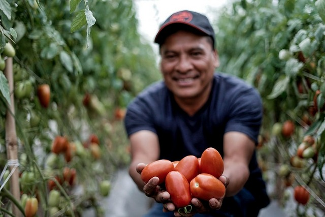 A farmer proudly displays some of the tomatoes he has grown in the region known as Mancomunidad Copán Chortí in eastern Guatemala, which includes the municipalities of Camotán, Jocotán, Olopa and San Juan Ermita, in the department of Chiquimula. Water harvesting initiatives have been implemented in the area to improve agricultural production in this region, which is part of the so-called Central American Dry Corridor. The initiative is supported by FAO and Mexican cooperation funds. CREDIT: FAO Guatemala